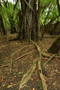 L'Îlet Chancel<br> Parc Naturel Régional de La Martinique