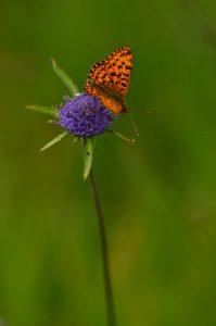 Papillon<br> Le Lac Chauvet<br> Parc Naturel Régional des Volcans d'Auvergne