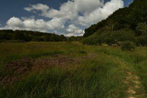 La Tourbière de Picherande<br> Parc Naturel Régional des Volcans d'Auvergne