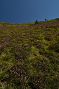 Le Puy Pariou<br> Parc Naturel Régional des Volcans d'Auvergne