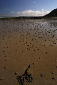 Le Cap Gris Nez<br> Parc Naturel Régional des Caps et Marais d'Opale
