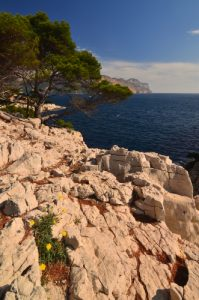 Cap Cable - 