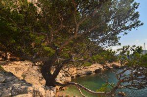 Calanques de Morgiou -  Parc National des Calanques