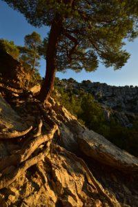 La Calanque d'En Vau<br> Les Calanques de Cassis<br> Parc National des Calanques
