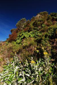 Flore sur les flancs du Volcan Irazú Parc national du Volcán Irazú Le Costa-Rica