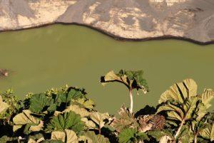 L'ombrelle du pauvre (Gunnera insignis) devant le lac vert du Volcan Irazú (3 432 mètres d'altitude / 300m de profondeur / 1000m de diamètre)<br> Parc national du Volcán Irazú<br> Le Costa-Rica