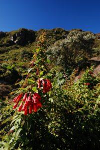 Flore sur les flancs du Volcan Irazú<br> Parc national du Volcán Irazú<br> Le Costa-Rica