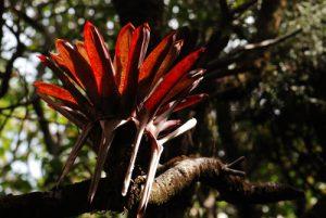 Epiphytes<br> Parc national du volcan Poás<br> Le Costa-Rica