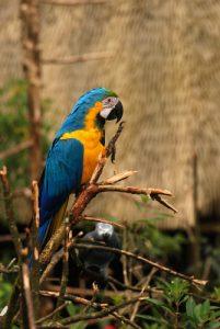 Perroquet<br> Los jardines de la Catarata La Paz<br> Le Costa-Rica