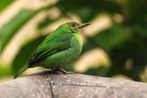 Oiseau<br> Los jardines de la Catarata La Paz<br> Le Costa-Rica