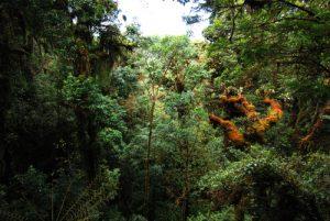 Forêt tropicale<br> Parc Genesis II<br> Le Costa-Rica