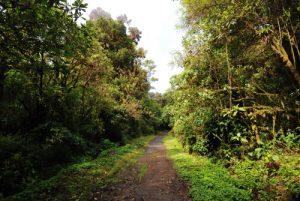 Sentier du volcan Barva<br> Parc national Braulio Carrillo<br> Le Costa-Rica