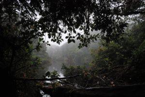 Lac Copey (40m de diamètre) Parc du volcan Barva Le Costa-Rica