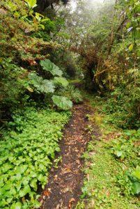 Sentier du volcan Copey<br> Parc national Braulio Carrillo<br> Le Costa-Rica