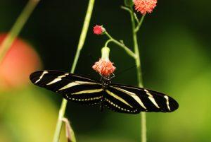 Papillon Parc Monumento nacional Guayabo Costa-Rica