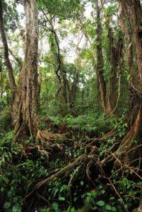 Parc de Cahuita Costa-Rica