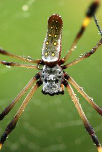 Araignée<br> Parc de Cahuita<br> Costa-Rica