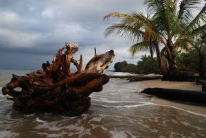 Parc de Cahuita<br> Costa-Rica