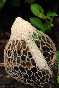 Champignon dans le gîte<br> Parc de Cahuita<br> Costa-Rica