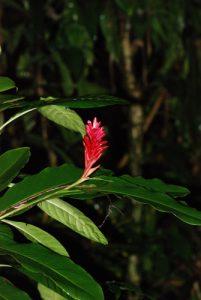 Flore dans le gîte<br> Parc de Cahuita<br> Costa-Rica