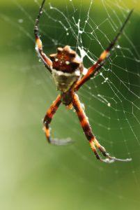 Araignée<br> Parc de Manzanillo<br> Costa-Rica