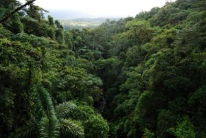 Puentes colgantes de Arenal Parc du Volcan Arenal Costa-Rica