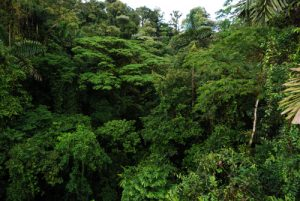 Puentes colgantes de Arenal<br> Parc du Volcan Arenal<br> Costa-Rica