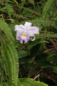 Orchidée<br> Parc du volcan Arenal<br> Costa-Rica
