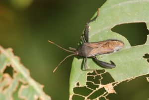 Insecte<br> Parc du volcan Arenal<br> Costa-Rica
