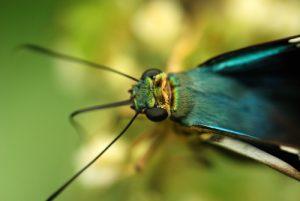 Papillon<br> La Catarata de La Fortuna<br> Parc du volcan Arenal<br> Costa-Rica