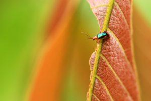 Insecte<br> La Catarata de La Fortuna<br> Parc du volcan Arenal<br> Costa-Rica