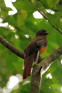 Oiseau<br> Parc du volcan Rincon de la Vieja<br> Costa-Rica