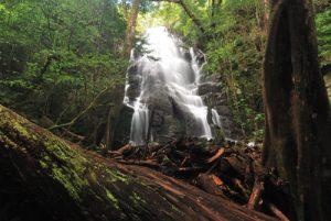 """Cascade du sentier """"Sendero Circular de Las Pailas""""<br> Parc du volcan Rincon de la Vieja<br> Costa-Rica"""