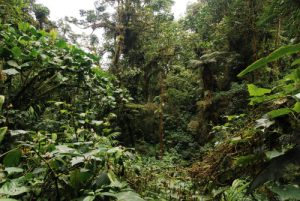 Forêt tropicale humide<br> Parc Santa-Elena<br> Costa-Rica