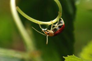 Insecte au bout d'une tige<br> Parc Santa-Elena<br> Costa-Rica