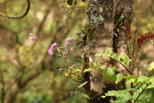 Orchidée<br> Parc Santa-Elena<br> Costa-Rica