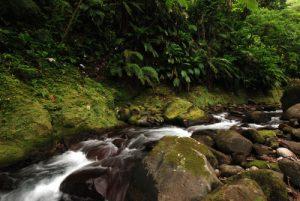 Ruisseau &amp; Forêt primitive<br> Cascade Sari-Sari Falls<br> Île de la Dominique (Dominica)