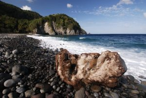 Souches mortes de Cocotiers<br> Plage de Pointe Mulatre Bay<br> Île de la Dominique (Dominica)