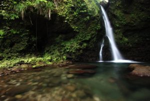 Cascades The Jacko Falls<br> Île de la Dominique (Dominica)