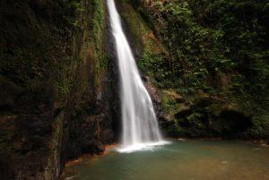 Cascade Milton Falls<br> Forêt du Syndicate Nature Trail<br> Île de la Dominique (Dominica)