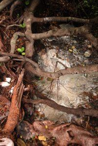 Marmites avec bulles de gaz carbonique<br> Cold sulphur Springs<br> Île de la Dominique (Dominica)