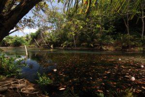 Mangrove de Petit Baptiste Bay<br> Île de la Dominique (Dominica)