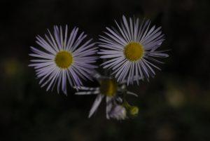 Flore de l'ENS du Marais de Cercanceaux