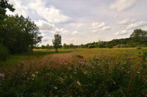 Espace Naturel Sensible du Marais d'Episy