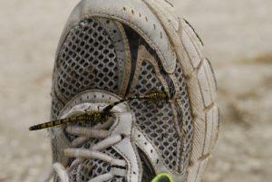 Onychogomphes à pinces (Onychogomphus forcipatus) sur une chaussure<br> Espace Naturel Sensible du Marais d'Épisy