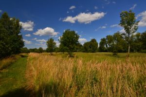 Espace Naturel Sensible du Marais d'Épisy