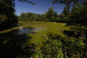 Espace Naturel Sensible de la Plaine de Sorques