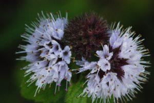 Flore de l'ENS de la Plaine de Sorques