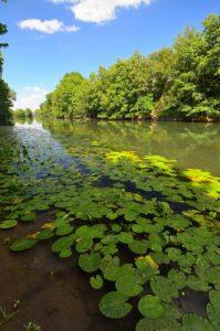 La rivière du Loing est longue de 166 km et affluent de la Seine<br> Espace Naturel Sensible de la Plaine de Sorques