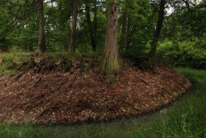 Mare à Bauge<br> Forêt de Fontainebleau